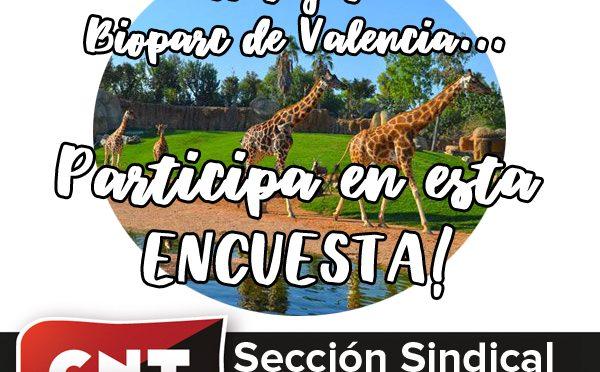 La Sección Sindical de CNT en el Bioparc Valencia convoca una encuesta de opinión a toda la plantilla
